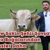 RAKİPSİZ BOGA ARABA FİYATINA ARTVİN'DEN ANTALYA'YA SATILDI