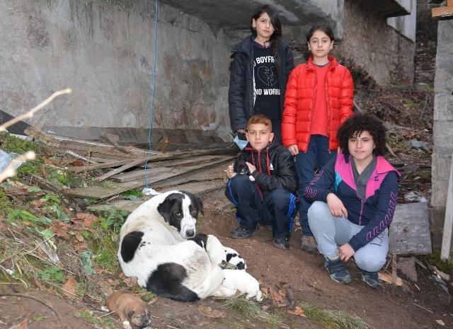 4 Genç Yavru Köpeklere Sahip Çıktı